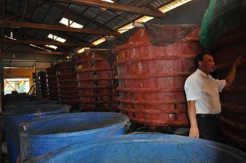 Tonneaux de fabrication de saumure de poissons (nước mắm).