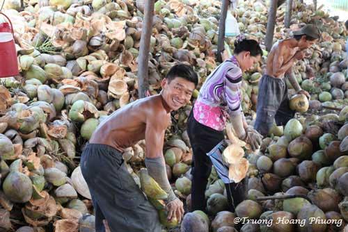 Epluchage des noix de coco.
