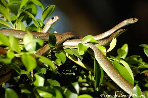 Ferme aux serpents Đồng Tâm.