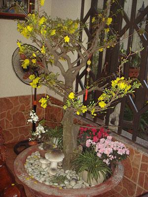 Fleurs jaunes d'une variété d'abricotier.