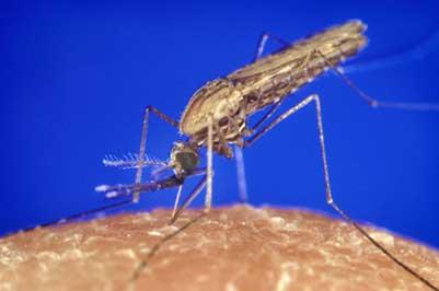 Paludisme au Vietnam : Les précautions à prendre