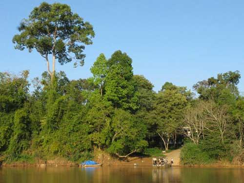 Le parc national de Cát Tiên.