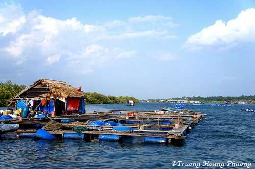 Radeau d'élevage des huitres à l'île Long Sơn.
